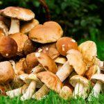 2016 11 03 trucs astuces intoxication champignons 150x150 - Le PPAAO-TOGO relance la culture du champignon dans l'Ogou