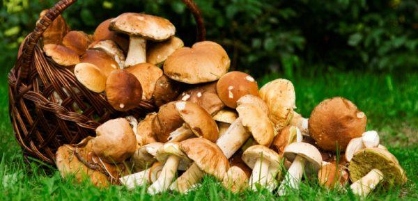 2016 11 03 trucs astuces intoxication champignons 600x289 - Le PPAAO-TOGO relance la culture du champignon dans l'Ogou