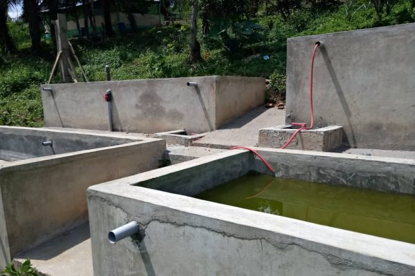 Ecloserie Kouma Konda 1 600x400 - Agriculture : Grâce au PASA, une écloserie fournit des alevins aux pisciculteurs de Kouma Konda