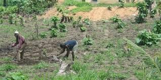 Agriculture - Tribune/ La riposte à la COVID-19 doit cibler l'agriculture et les populations rurales pauvres d'Afrique (Par Olusegun Obasanjo et Hailemariam Desalegn Boshe)