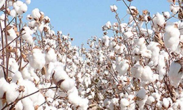 Facteurs explicatifs baisse 600x360 - Togo/ Baisse de la production cotonnière: les raisons