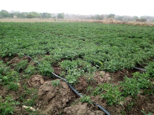 Ferme ASG AGRI 494x370 - Agriculture: ASG-AGRI, un label de cultures bio