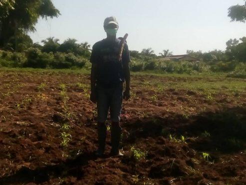 Paysan Togoville 493x370 - Pluie ce lundi: le soulagement des paysans