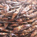 Poissons fumés 150x150 - Au Togo, 41% des produits de pêche sont fumés