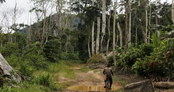 Forêt - Togo/ 60 milliards FCFA pour entretenir et améliorer l'écosystème forestier