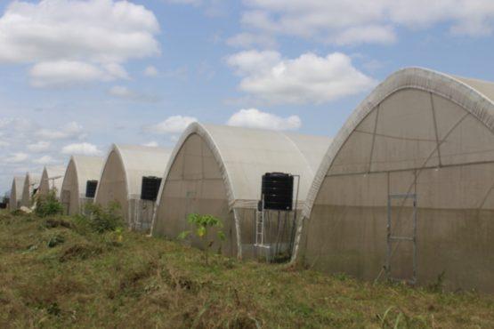 """IMG 20200608 WA0033 555x370 - """" Terre bénie"""", une ferme agropastorale pas comme les autres !"""