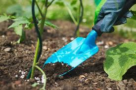 semences certifiées - Les semences certifiées contribuent à 40% à l'accroissement des rendements