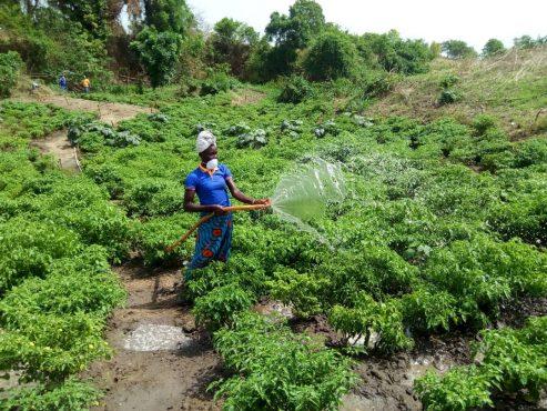 Kara AGR 493x370 - Togo: 938 jeunes de la région de la Kara s'auto-emploient grâce au projet EJV